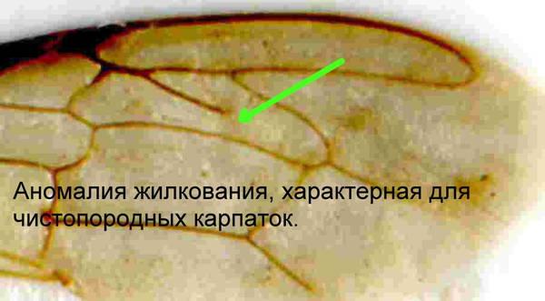 http://se.uplds.ru/t/ghxkd.jpg